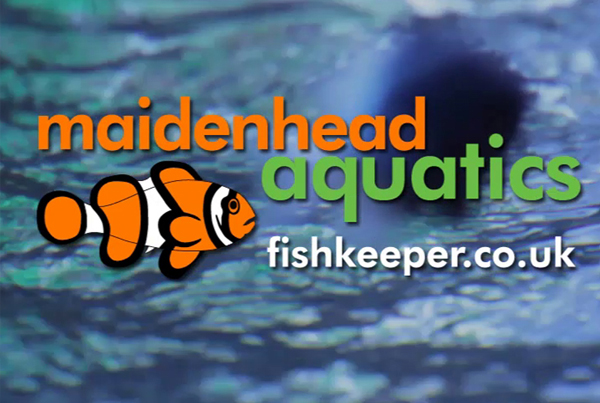 Maidenhead Aquatics ITV advert